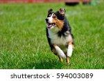 Stock photo running dog 594003089
