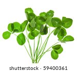 Bouquet Of Leaves Clover...