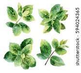 set of mint sprigs isolated on... | Shutterstock . vector #594024365