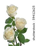 Stock photo bouquet with white roses 59412625
