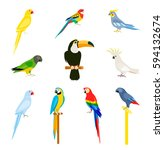 tropical parrot set with... | Shutterstock .eps vector #594132674