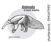 giant anteater hand drawing.... | Shutterstock .eps vector #594147995