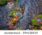 Autumn Leaves On The Stream...