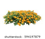 Orange Flower Bush Tree...