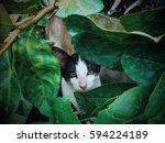 Stock photo adorable animals 594224189