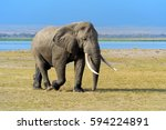 Elephant In National Park Of...