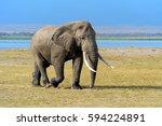 elephant in national park of... | Shutterstock . vector #594224891