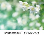 spring natural  background with ... | Shutterstock . vector #594290975