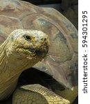 Close Up Of A Galapagos...