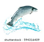 atlantic salmon fish jumping... | Shutterstock . vector #594316409