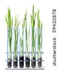 grass growing in test tubes | Shutterstock . vector #59432878