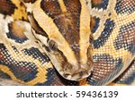 boa snake head close up - stock photo