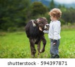 Boy And Calf On The Field ...
