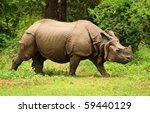 Great Indian One Horned...