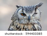 awesome owl outdoor shot. owl... | Shutterstock . vector #594403385