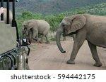 Elephants Crossing The Path In...