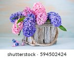Beautiful Hyacinth Flowers In A ...