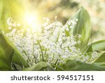 flower lily of the valley... | Shutterstock . vector #594517151