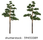 pine trees isolated on white   Shutterstock . vector #59453389