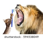 funny photo of cat brushing... | Shutterstock . vector #594538049
