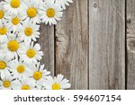 daisy chamomile flowers on... | Shutterstock . vector #594607154