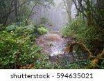 rain forest waterfall. | Shutterstock . vector #594635021