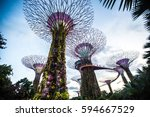 tree grove at garden by the bay   Shutterstock . vector #594667529