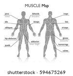 muscles in the body  vector | Shutterstock .eps vector #594675269