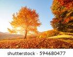 shiny beech tree on a hill... | Shutterstock . vector #594680477