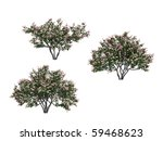 Lilac Trees Isolated On White...