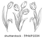 Tulip Flower Graphic Black...