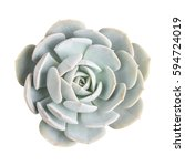 succulent plant isolated on... | Shutterstock . vector #594724019