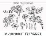 drawing flowers. vector... | Shutterstock .eps vector #594762275