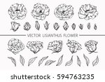 drawing flowers. vector... | Shutterstock .eps vector #594763235