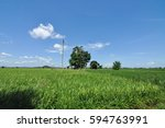 Green Paddy Field With Blue Sk...