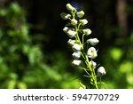 white flower is beautilful in...   Shutterstock . vector #594770729