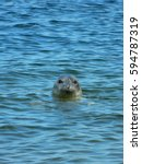 Common Seal  Also Known As The...