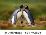 animal love. king penguin... | Shutterstock . vector #594793895