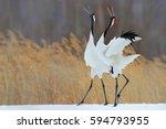 bird behaviour in the nature... | Shutterstock . vector #594793955