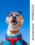 a dog is smiling with wearing... | Shutterstock . vector #594804254