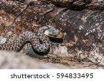 Green Whip Snake  Hidden In Th...