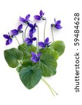 Violets And Leaves  Over White...