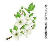 blossoming apple tree twig | Shutterstock .eps vector #594911945