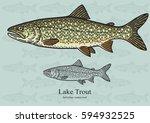lake trout  salmon trout....