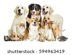 Stock photo set pet on a white background 594963419