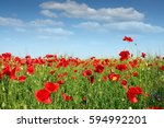 Poppy Flower Field Spring Season