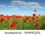 Poppy Flower Field Spring Season