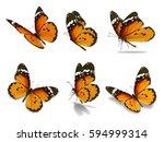 Beautiful Six Monarch Butterfl...