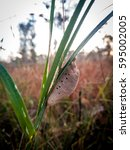 Small photo of grass, good morning, Dewey, sunshine, sunlight, Insect