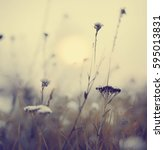 Small photo of Landscape background beautiful field flowers in summertime or springtime/ sele?tive focus